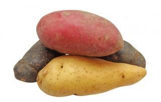 Zoete aardappel vs gewone aardappel