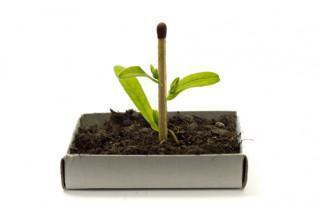 Genetisch gemodificeerd voedsel (GGO/GMO)